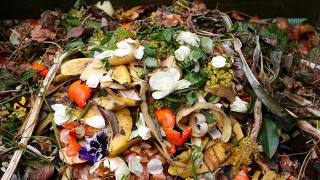 Resíduos sólidos urbanos: resíduos alimentares