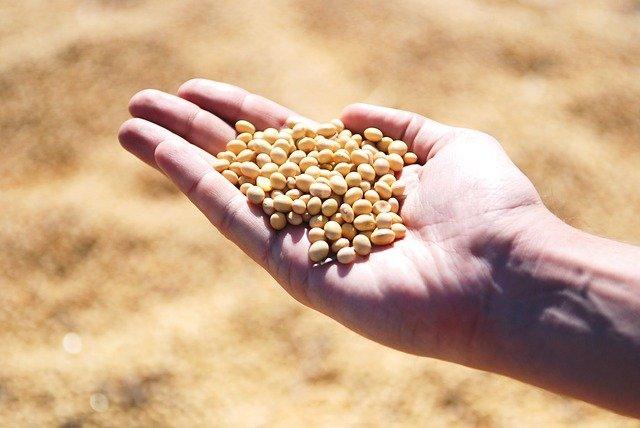 Alimentos derivados da soja