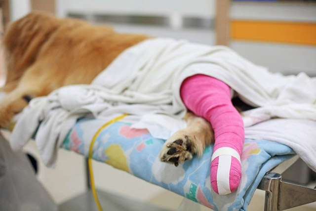 Talas e bandagens