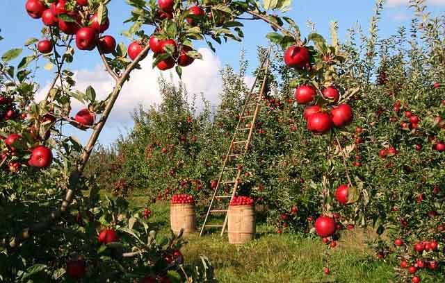 Estudo de caso: A política agrícola atual, a pesquisa e o meio ambiente
