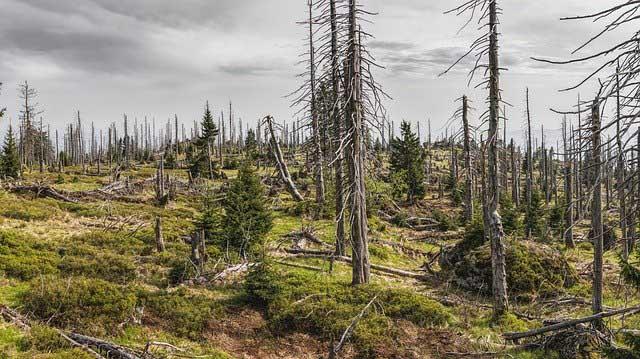 A Degradação Ambiental pelo Fator Antrópico